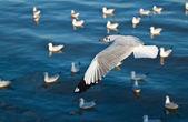 Seagulls flying over the sea — Stockfoto
