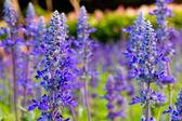 Purple tropical flower — Stock Photo