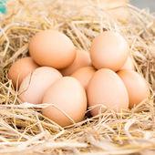 Eggs in a straw nest — Stockfoto