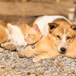 Stock Photo: Dog and cat lying together