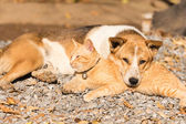 Dog and cat lying together — Stock Photo