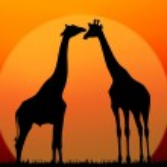 Couple of giraffes — Stock Photo #42346695