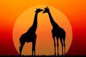 Kilka żyrafy — Zdjęcie stockowe
