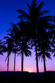 Palm trees silhouette with sunset — Stockfoto