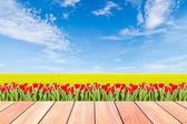 Tulpen met groene rijst gebied tegen blauwe hemel en plank hout — Stockfoto