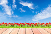 Tulips with green grass against blue sky and plank wood — Stock Photo