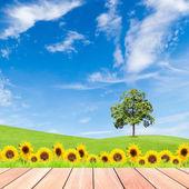 Zonnebloemen en boom op groen grasveld met blauwe hemel en hout — Stockfoto