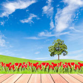 Tulips and tree on green grass field with blue sky and  wood pla — Stock Photo