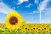 Sunflowers field with wind turbine and blue sky — Stock fotografie