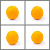 白で隔離されるオレンジのセット — ストック写真