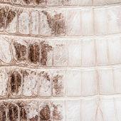 White crocodile leather texture  background — Stock Photo