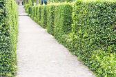 Bahçe güzel geçit — Stok fotoğraf
