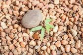 Çakıl büyüyen Fideler — Stok fotoğraf