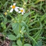 Summer wildflowers — Stock Photo #31586675