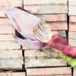 Banana flower — Stock Photo