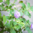 Purple flower branch in small home garden — Stock Photo