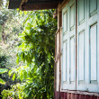 close window of old henhouse with green garden — Stock Photo
