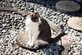 кошка сидя досуг — Стоковое фото