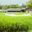 Agricultural shed and green crops field — Stock Photo