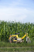 Moped in nature — Stock Photo