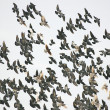 Bird Swarm — Stock Photo #24590489