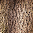 Rind of a tree — Stock Photo