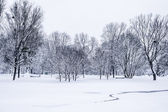 Winter park in snow — Stock Photo