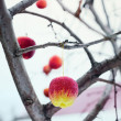 Toys in the Form of Apples on a Branch in Winter — Stock Photo