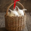 Card with Couple White Rabbits in the Basket — Stock Photo