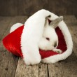 Foto de Stock  : Christmas Card with White Rabbit on Wooden Background