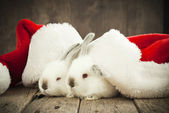 Christmas Card with Couple White Rabbits in Caps — Stock Photo