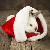 Cartolina di natale con un coniglio bianco su fondo in legno — Foto Stock