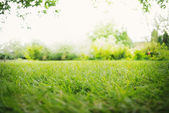 Background with Green Landscape — Stock Photo