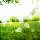 Green Landscape Background with Sunshine and Boke — Foto Stock