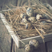 Quail Eggs Easter Pastel Colors — Stock Photo
