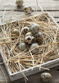 Przepiórcze jajka wielkanocne — Zdjęcie stockowe