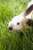White Rabbit in a Grass — Stock Photo
