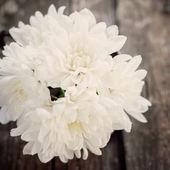 春天的白花 — 图库照片