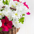 White and Pink Petunia flowers in a wattled basket on wooden bac — Stock Photo #27652477