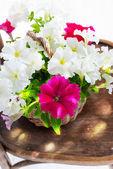 Petunia flowers in a wattled basket — Stock Photo