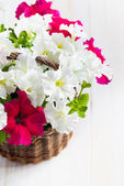 White and Pink Petunia flowers in a wattled basket on wooden bac — Stock Photo