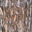 Pine Bark — Stock Photo #28870151