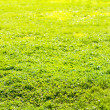 Stock Photo: Grass field in sun rays