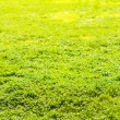 Grass field in sun rays — Stock Photo #29497705