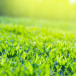 Close up of Field Grass in sun rays — Foto de Stock