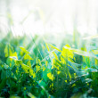 Background with Green Summer Grasses and Sunny Rays — Stock Photo