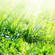 Stock Photo: Sunshine fall in Field of Grass, summer background
