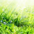 Sunshine fall in Field of Grass, summer background — Stock Photo #29499121