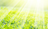 Sunshine fall in the field of a grass, background — Stock Photo