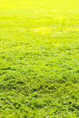 Grass field in sun rays — Stock Photo